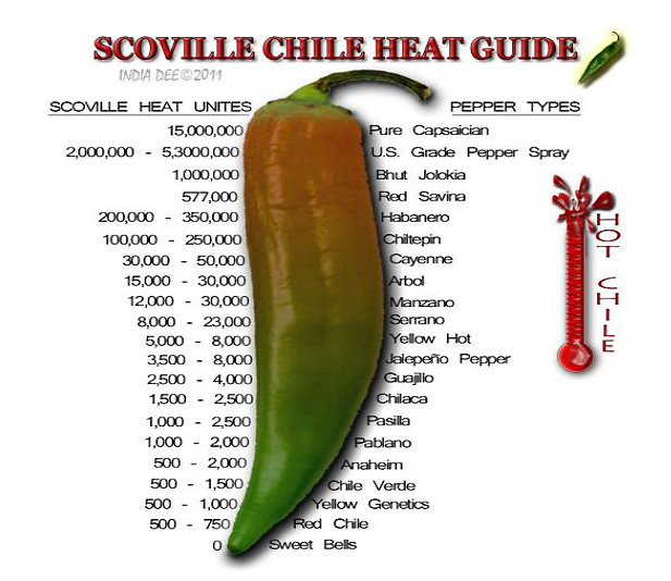 The Trinidad Scorpion Butch T chili pepper: the world's hottest