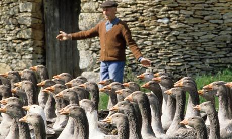 Reputable foie gras farms do not abuse or torture ducks.