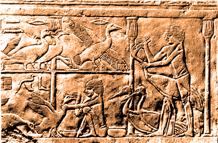 The Egyptians, along with several other ancient cultures, practiced duck and goose gavage for culinary purposes.